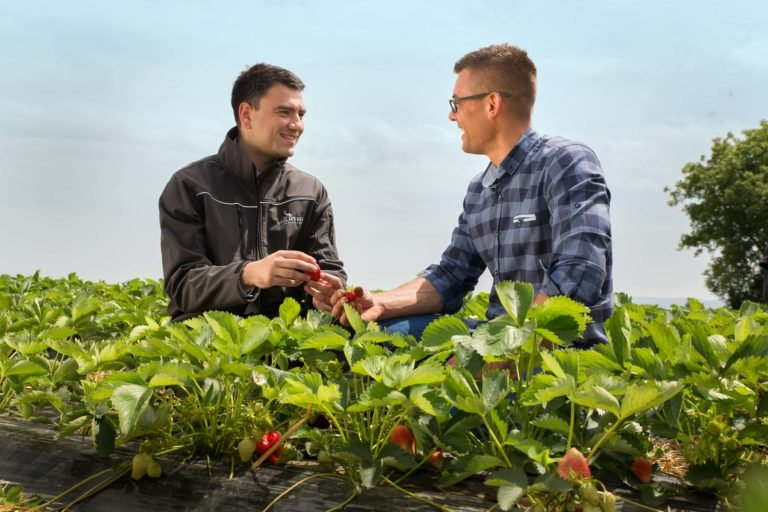 Dusan and strawberry grower Michal in strawberry field