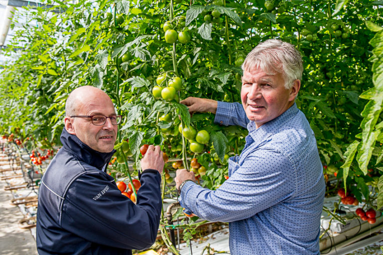 Erik van den Bergh and grower in tomato greenhouse