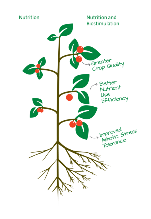 Infographic of a plant explaining the effect of combining nutrition with biostimulation